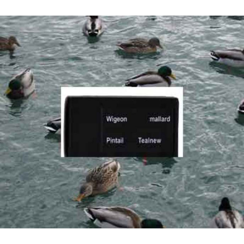 Ucaller Card For Ducks